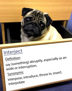 pug-word-of-the-day