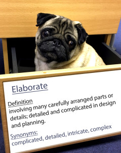 pug-word-of-the-day 3