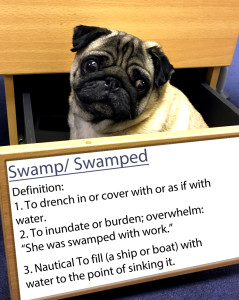 pug-word-of-the-day 4