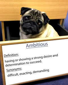 pug-word-of-the-day 8