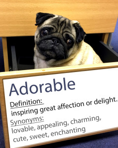 pug-word-of-the-day day 1