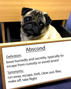 Abscond word of the day.fw