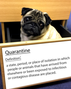 pug-word-of-the-day 23.fw
