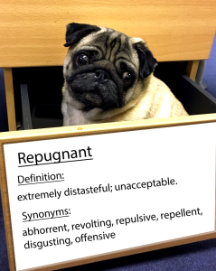 pug-word-of-the-day 26.fw