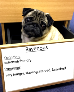 pug-word-of-the-day 31.fw