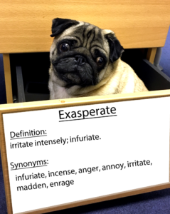 pug-word-of-the-day 33.fw