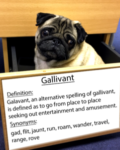pug-word-of-the-day 34.fw