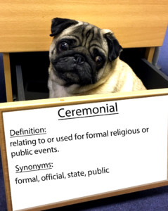 pug-word-of-the-day 36.fw