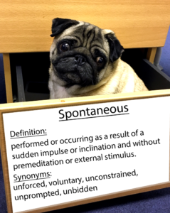pug-word-of-the-day 37.fw